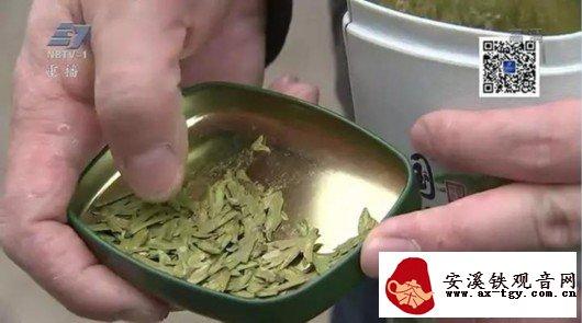 媒体卧底茶叶市场:香味可调,年份造假,以次充好
