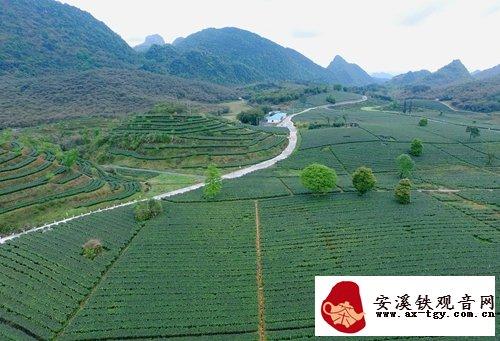 普京:英德的英红九号红茶非常的好,下次到了中国广东再喝这个茶!