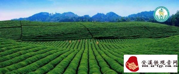 """2019新茶上市丨携手贵州,相约品""""干净茶、生态茶"""""""